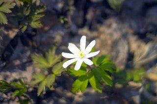 Первые цветы :)