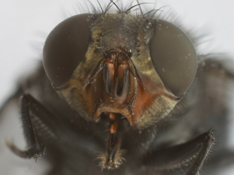 Портрет мухи
